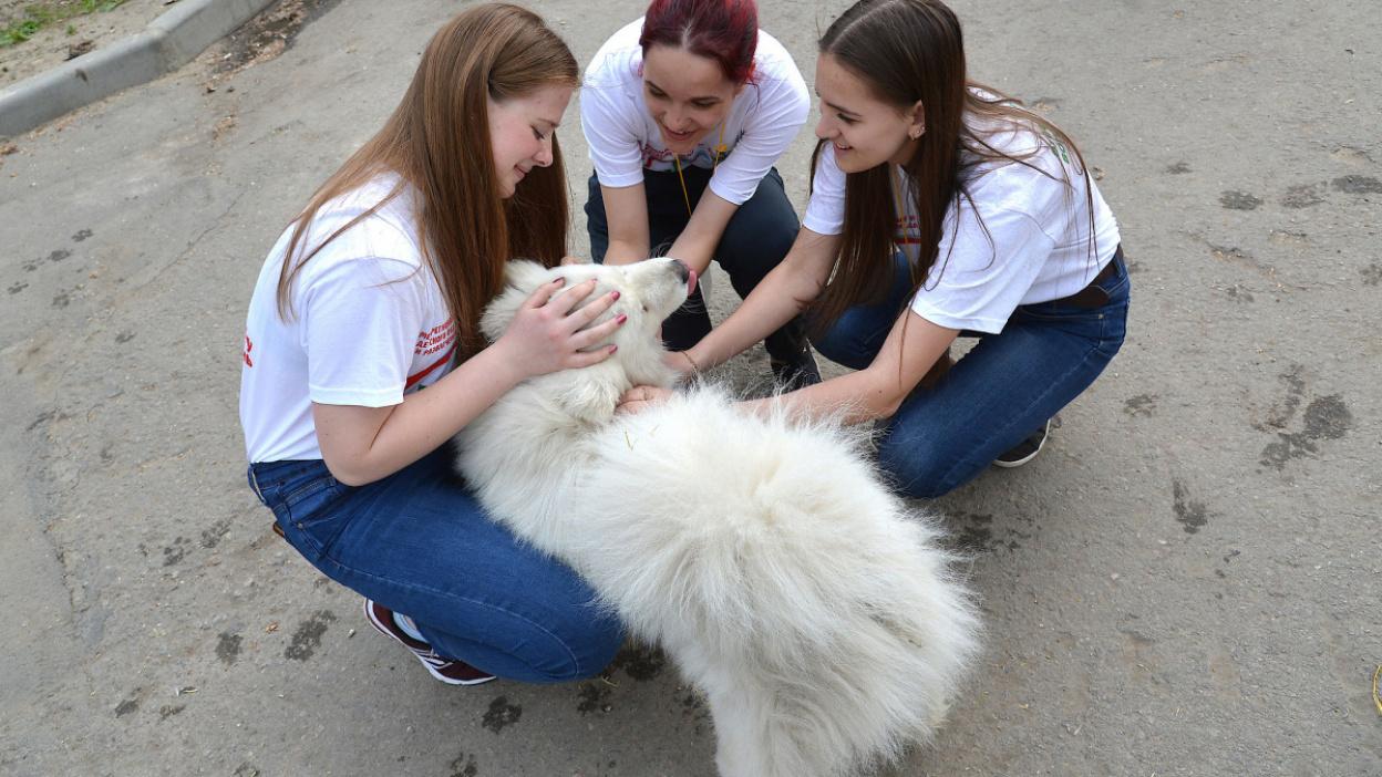 Запрос на справедливость. Как будет работать закон о животных в Воронеже