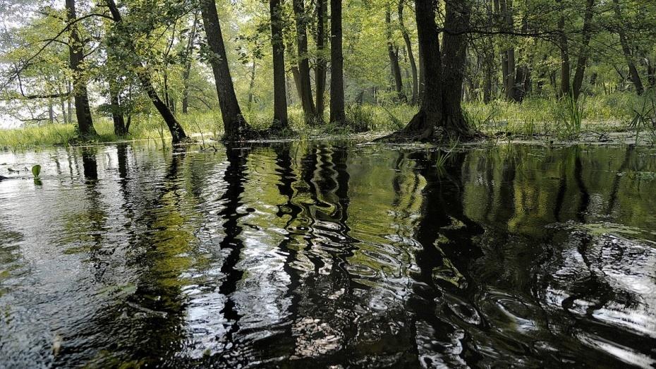 Прокурорская проверка неподтвердила загрязнение пестицидами реки Усмань итерритории Воронежского заповедника