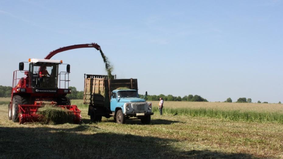 В Хохольском районе заготовили 2650 тонн сена