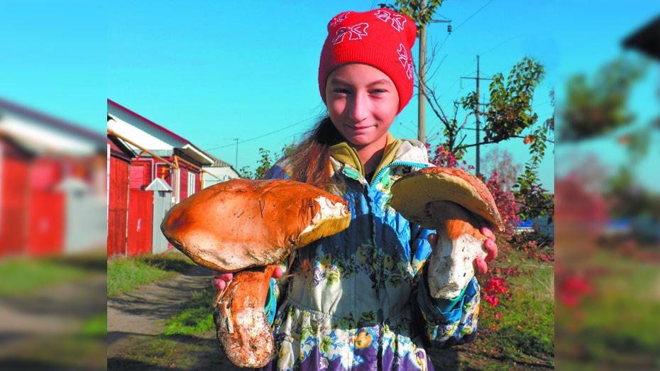 Житель Борисоглебска нашел в лесу белый гриб весом 2 кг