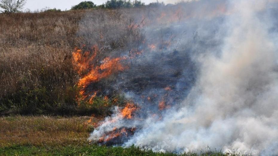 Уровень пожарной опасности понизился в 5 районах Воронежской области