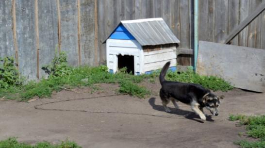 Хозяйка собаки – убийцы годовалого малыша в Воронежской области: «У меня нет объяснения»
