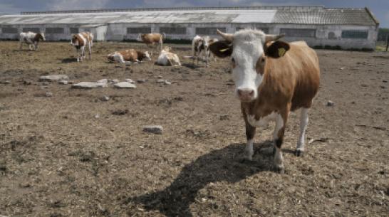 Фермерша в Воронежской области присвоила почти 300 тыс рублей из бюджета
