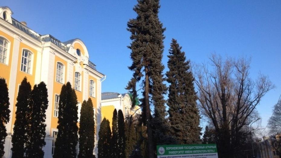 Воронежские университеты вошли в топ-10 сельскохозяйственных вузов России