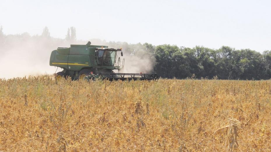 Воронежская область вошла в десятку ведущих регионов по производству пшеницы