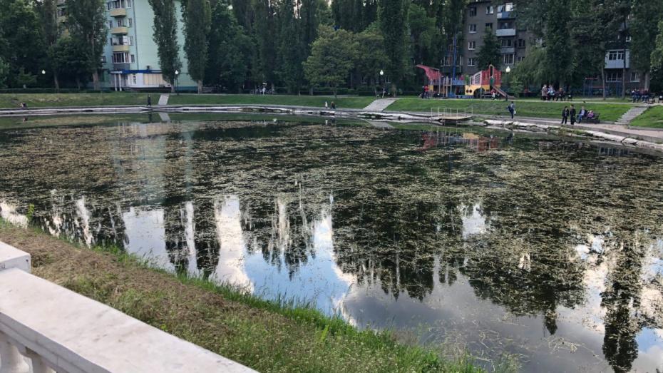 В мэрии Воронежа рассказали о содержании Лебединого озера на левом берегу