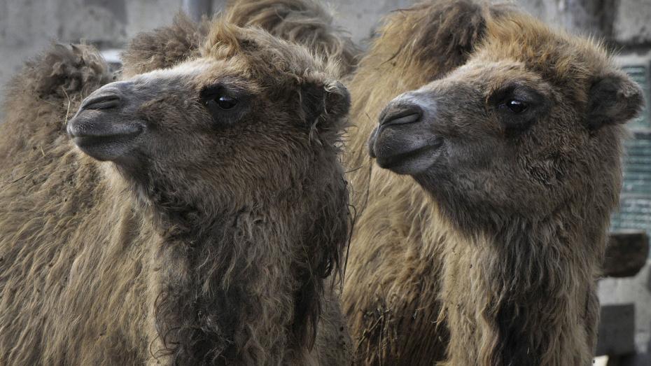 Воронежцев позвали на «соломенный фуршет» в зоопарке