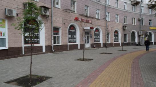 В Воронеже засохли высаженные весной на улице Мира рябины