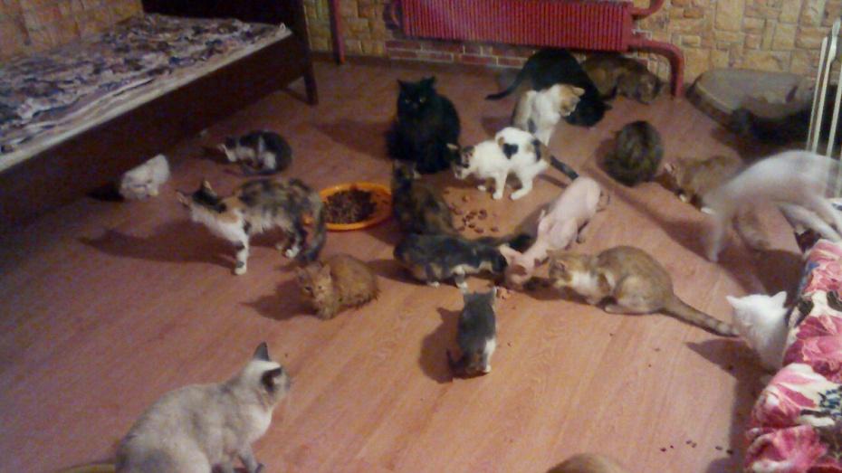 Волонтеры попросили у воронежцев помощи для 100 кошек и собак погибшей в ДТП женщины