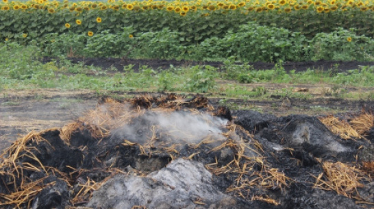 В таловском хозяйстве сгорело 339 т сена