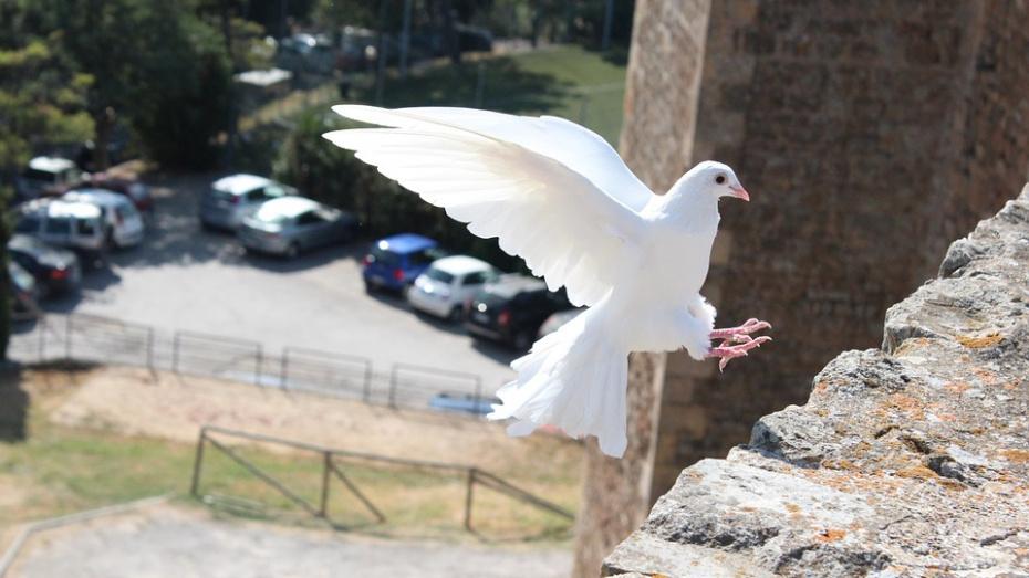 В честь юбилея Воронежского госуниверситета в небо выпустят 200 голубей