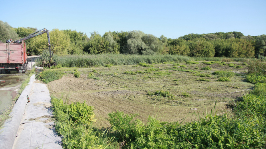 В реке Тихая Сосна в Воронежской области образовались 100-метровые заторы из растений