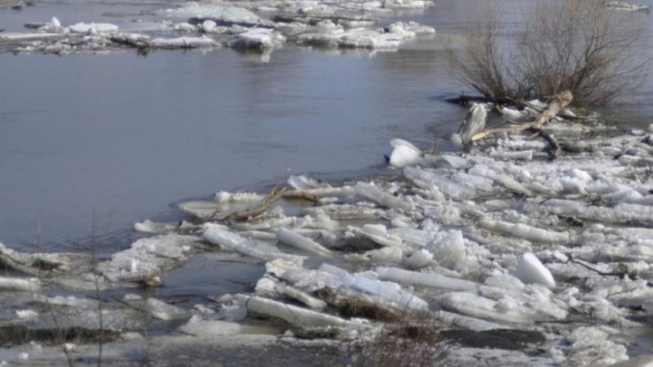 В рамонском селе Кривоборье жители спасли тонувшего 31-летнего воронежца