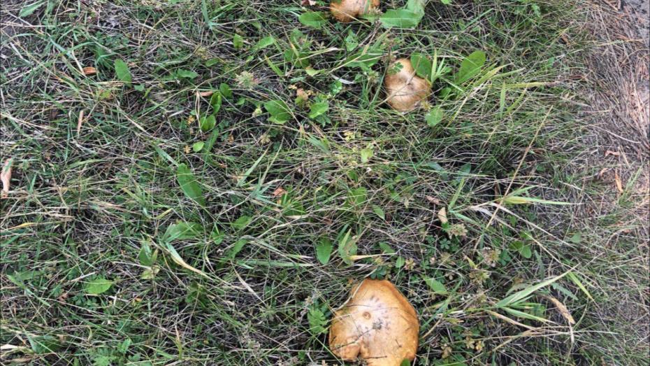 В Воронеже из больницы выписали последнего отравившегося грибами пациента