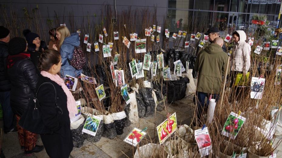 Воронежцев пригласили на выставку-ярмарку саженцев