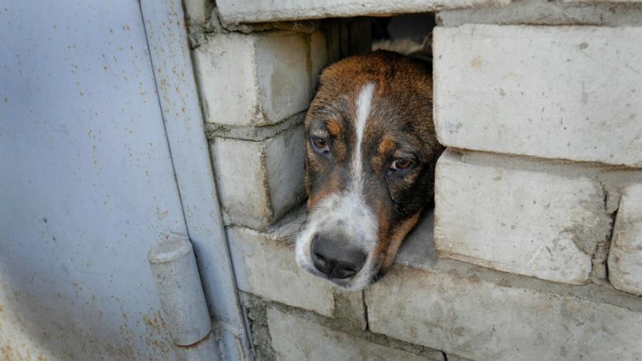В Воронеже ввели карантин из-за вспышки бешенства в зоопансионате