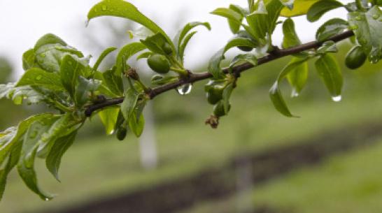 Метеорологи: август в Воронеже начнется с дождей