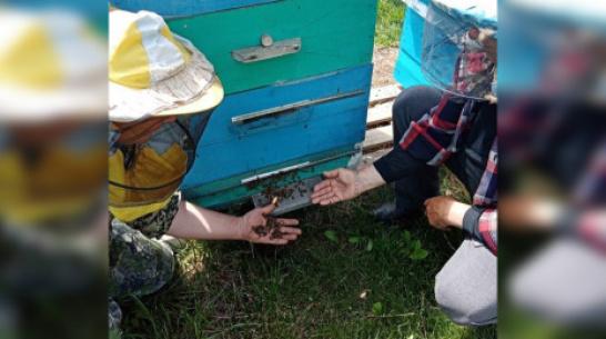 В панинском поселке Березняги у трех пасечников погибли пчелы