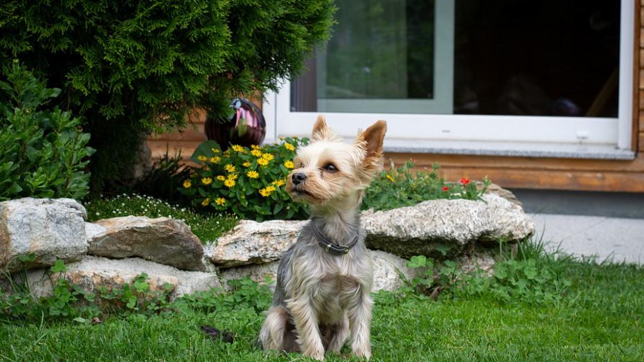 Эксперты назвали самую популярную у воронежцев породу собак