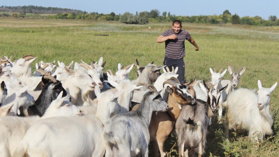 Таловские фермеры получили более 20 млн рублей грантов