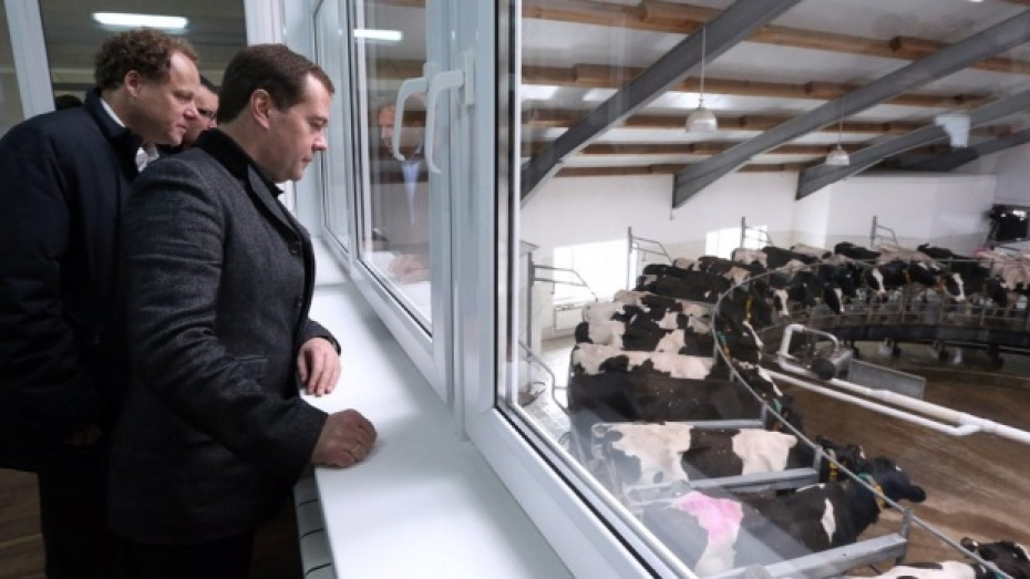 Воронежские власти преподнесут регион как «молочную столицу России»