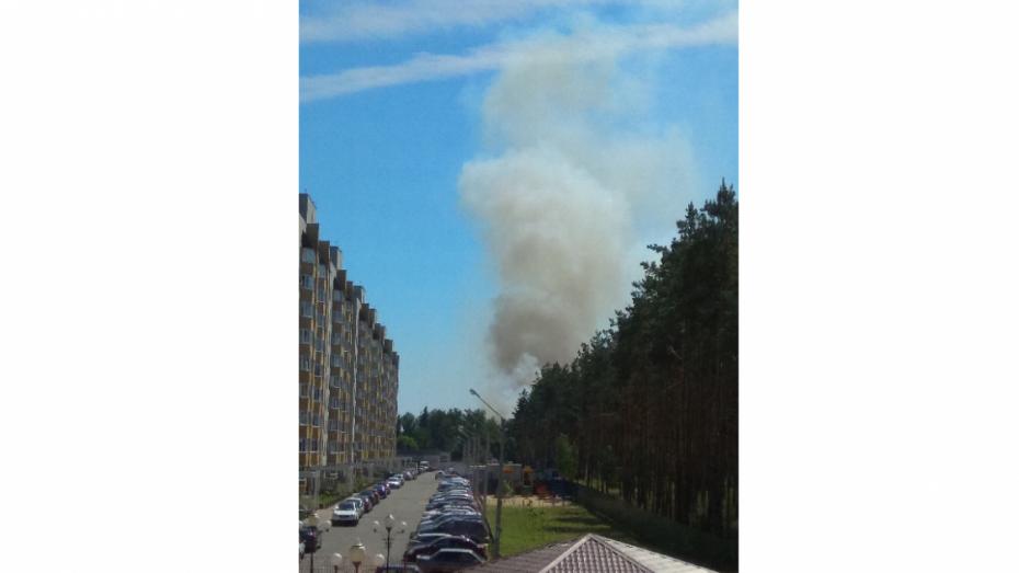 Горожане опубликовали фотографии крупного лесного пожара под Воронежем
