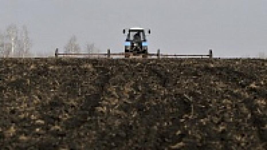 В Воронежской области в 2014 году посеют 1,9 млн гектаров яровых культур