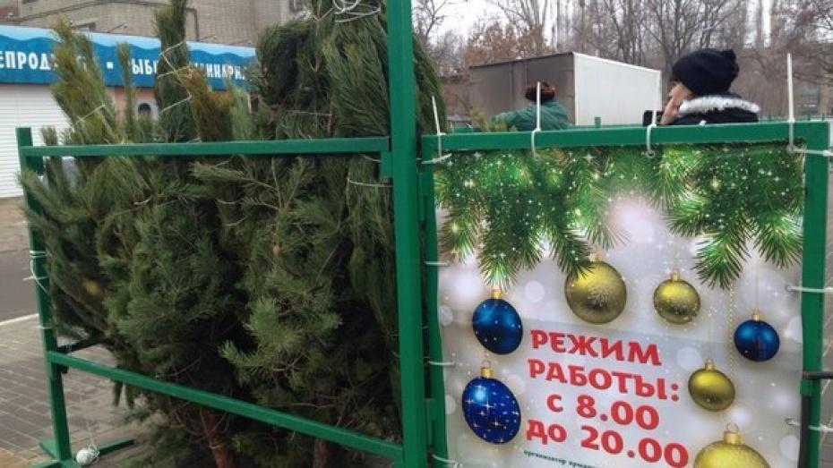В Воронеже открылись новогодние елочные базары