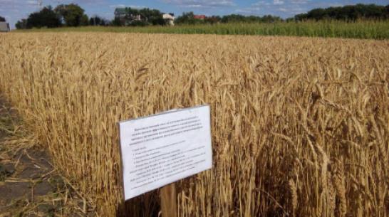 Воронежцы пожаловались на химическую обработку полей в черте города