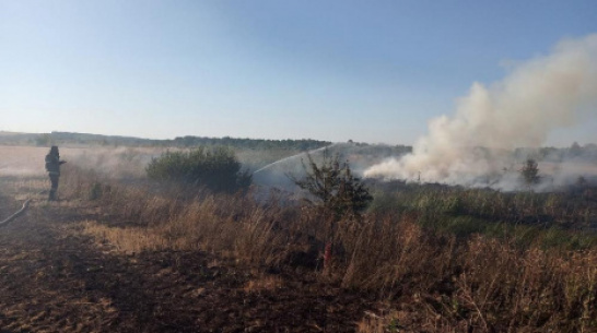В панинском селе Борщево на площади 20 га выгорел сухостой