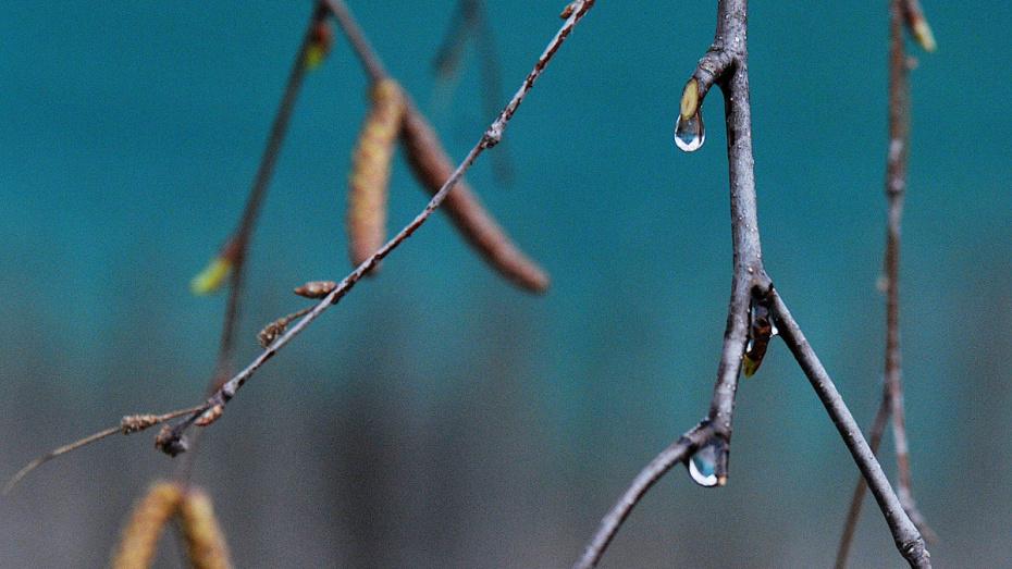 В Воронеже прошедший март стал самым теплым за 100 лет