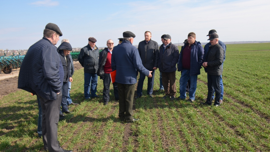 Верхнемамонские аграрии впервые за 15 лет приступили к посевной в марте