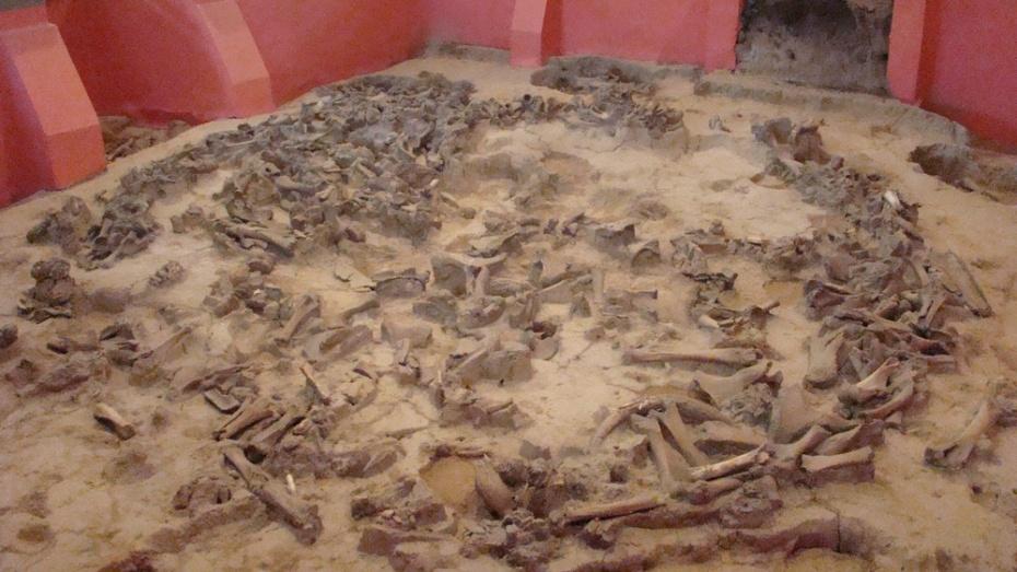 В хохольском музее «Костенки» в июле стартует программа «Живая археология»