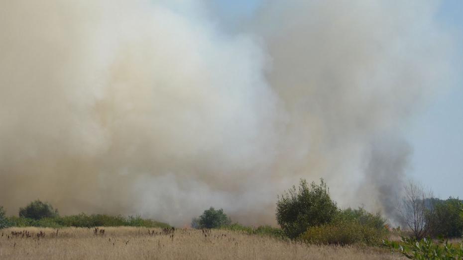 Под Воронежем загорелось поле рядом с жилыми домами