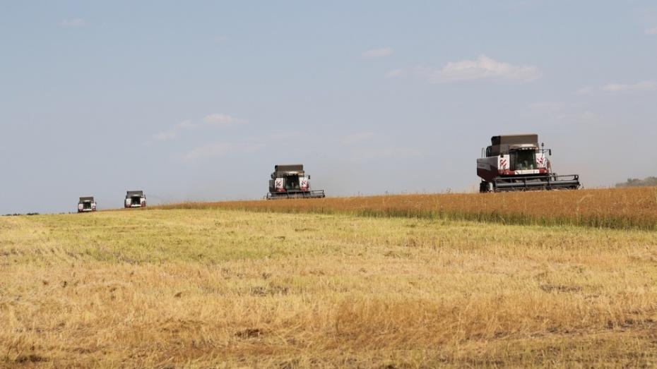В Новохоперском собрали первый урожай масличного льна