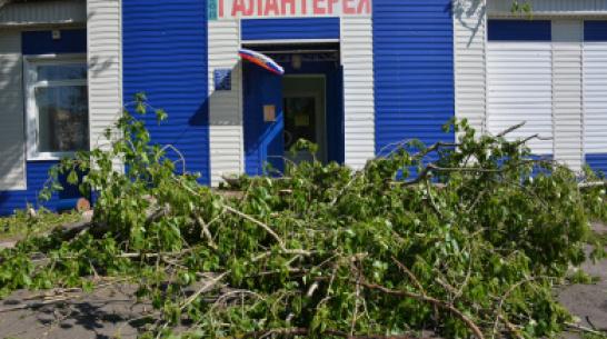 В Каширском районе сильный ветер повалил деревья и оборвал электрические провода