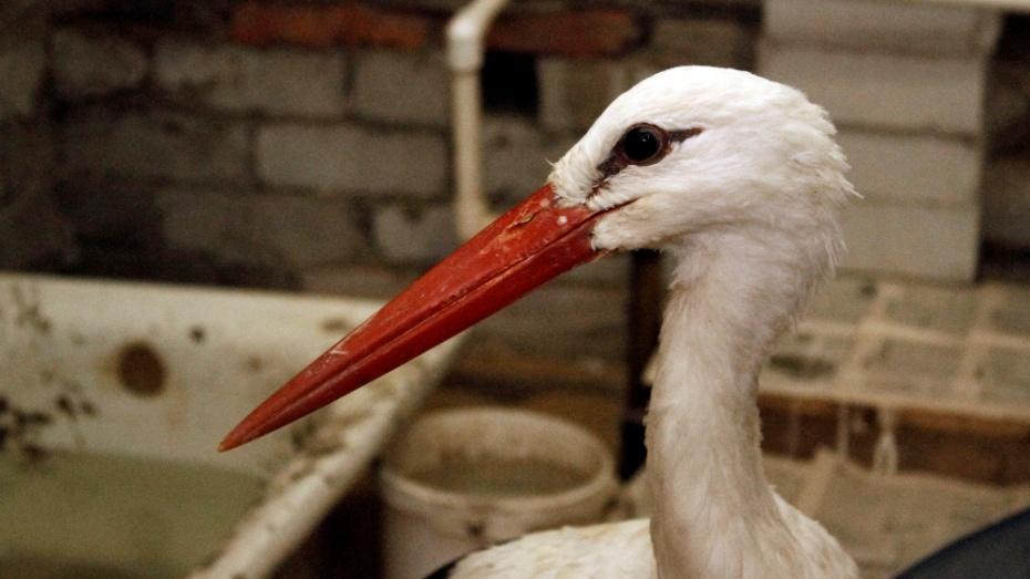 В Воронежском зоопарке из-за эпидемии уничтожат всех птиц