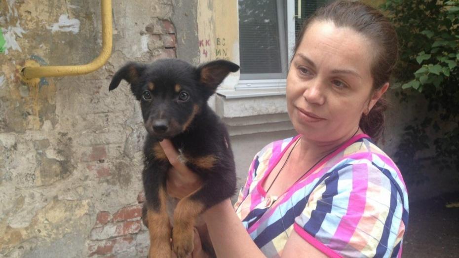 Задушивший щенков воронежец признался в их убийстве