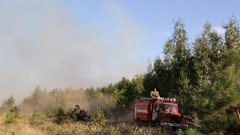 В 15 районах Воронежской области введут высший класс пожароопасности
