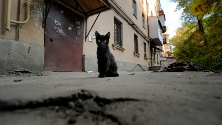ВВоронеже спасли замурованную под бетоном кошку