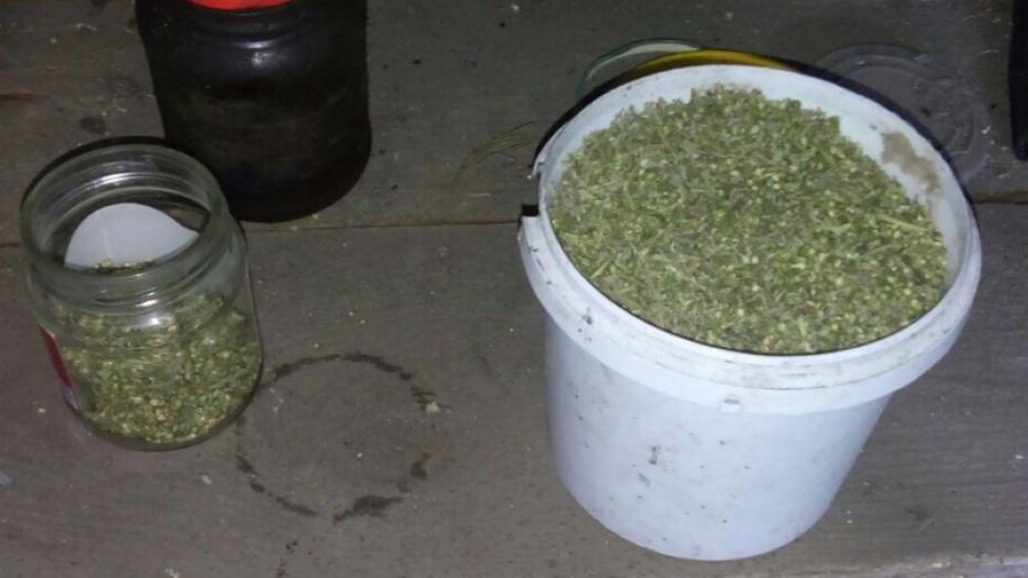 В купить марихуана воронеже марихуане новости