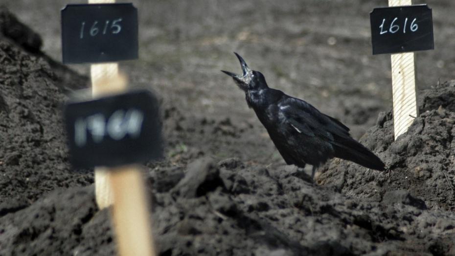 Воронежцы попросили губернатора перенести строительство крематория