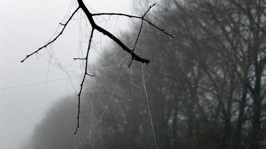 Безработные воронежцы очистят леса от сухостоя