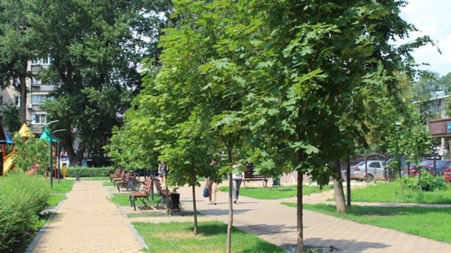 В Воронеже осенью высадят 7 тыс кустарников и 870 деревьев