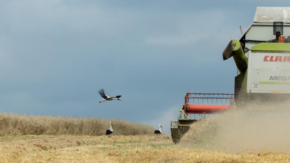 Воронежский «Продимекс» собрал второй по объему урожай зерновых за время работы в регионе