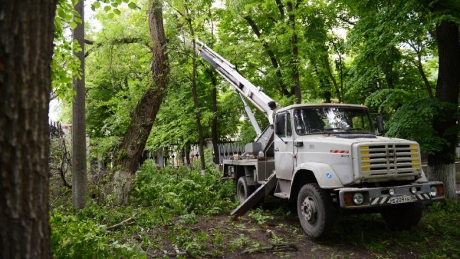 На благоустройстве сквера «Чижовский» мэрия Воронежа сэкономит 525 тыс рублей