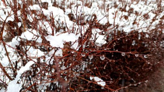 Синоптики: в выходные в Воронеже может пойти снег