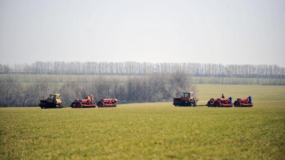 Хозяйствам Воронежской области, пострадавшим от засухи в прошлом году, окажут поддержку