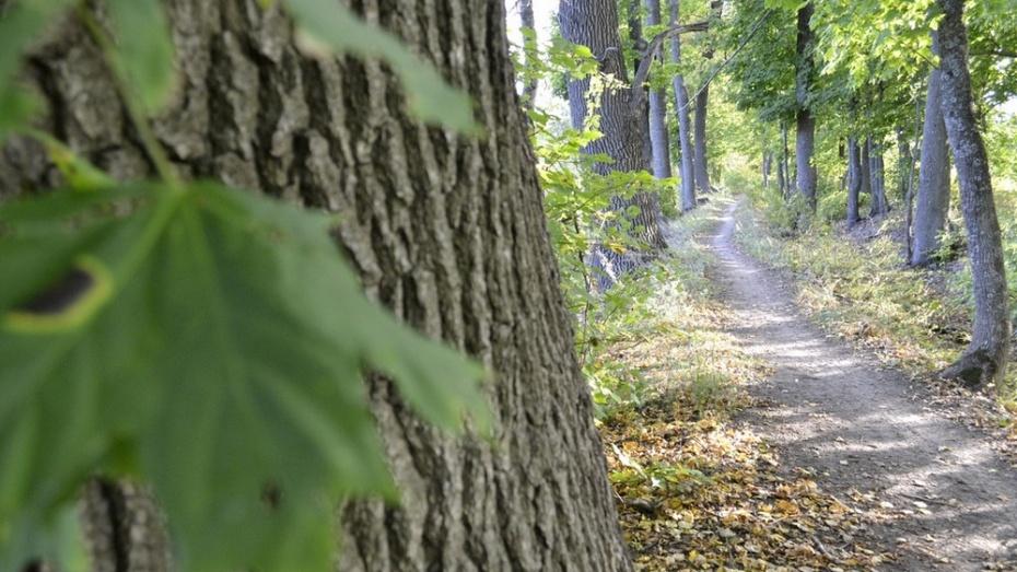 Пропавшую без вести 31-летнюю женщину отыскали убитой вворонежской лесополосе