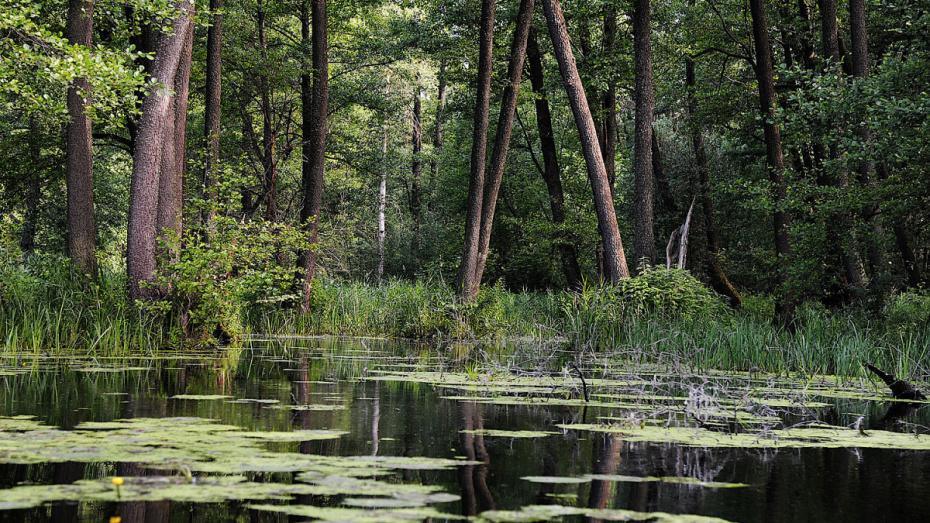 Воронежцы смогут посетить биосферный заповедник с 8 июля